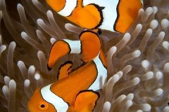 Great-Barrier-Reef2