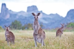 Warrumbungle National Park, New South Wales, Australia.