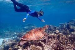 Via_Travel_Australia_Ningaloo_Reef_Snorkeler_with_Turtle