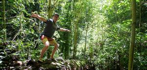 Australia tours - dorrigo national park