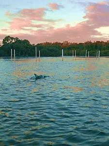 dolphins in port macquarie sydney to cairns tour